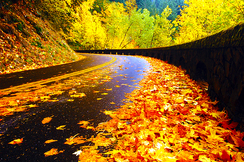 autumn-road-oregon